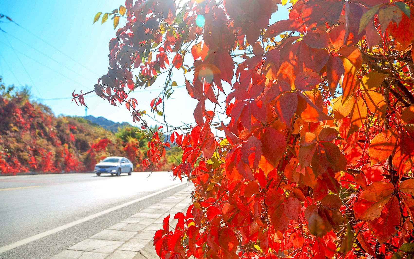 又到赏红季 北京推荐19处特色彩叶景区图片