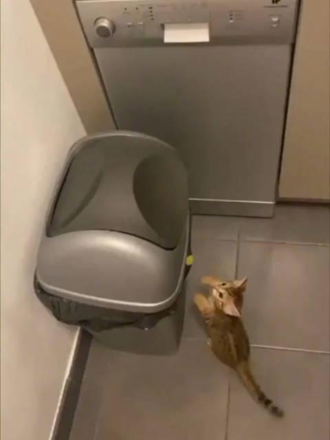 """好奇害死猫…小小年纪就遭遇了生活的教育和""""毒打"""""""