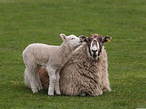 10月底属羊人会遇见一生最大的贵人,历经2次喜事,走向人生巅峰