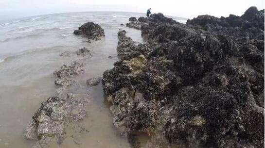 男子在海边捡海螺,突然发现石洞有异响,随后伸手一摸乐坏了