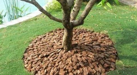 被松树皮铺过的地后来都怎样了?