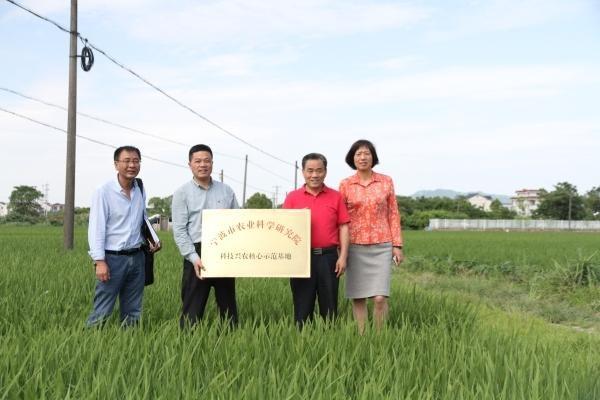 连破浙江、湖南单产记录!优质高产的宁波超级稻如何炼成?