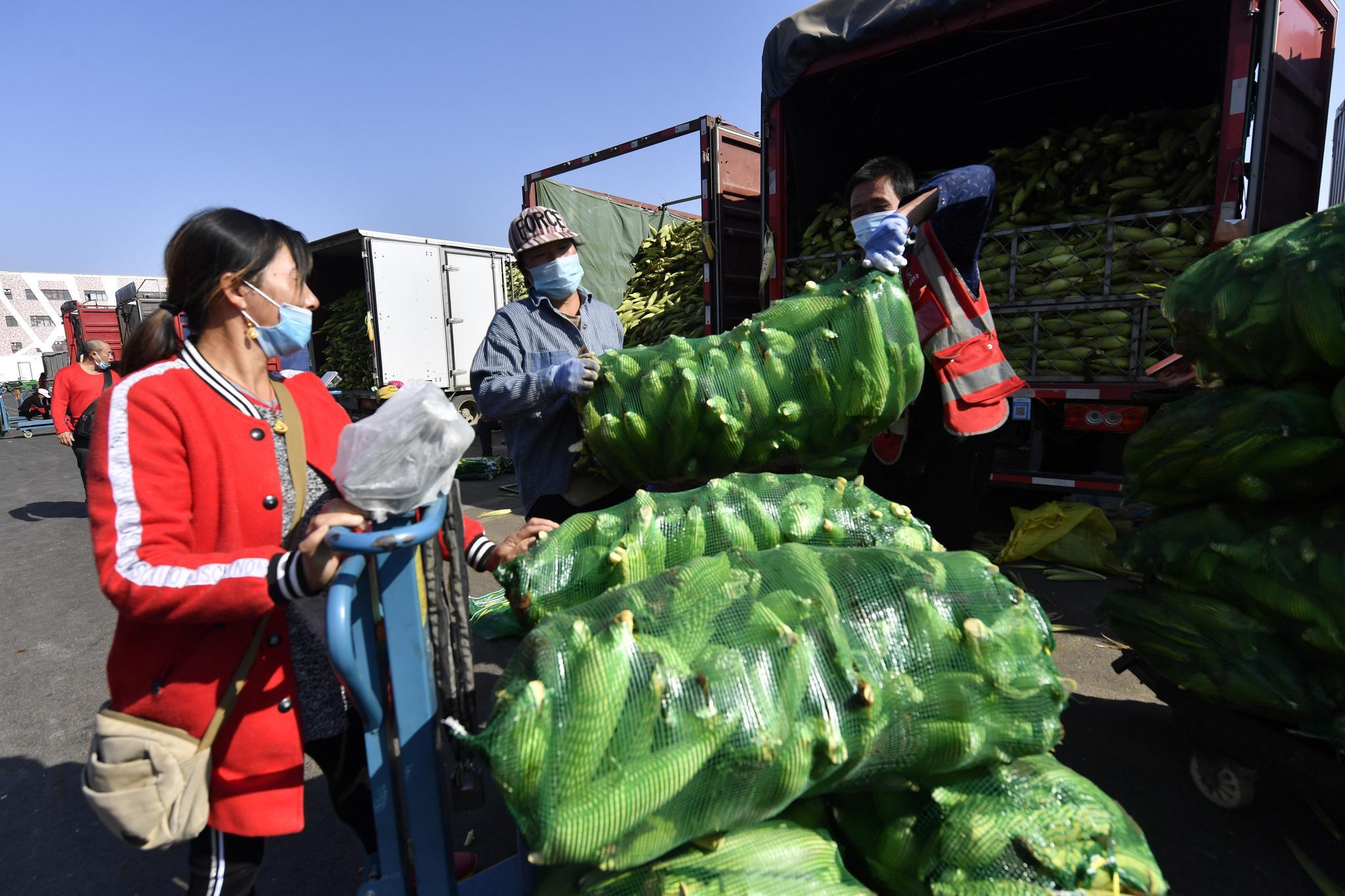 眼下正是鲜食玉米销售旺季,商户忙着批发玉米。南方玉米明天即将到京,销量还会增加。摄影/新京报记者吴宁