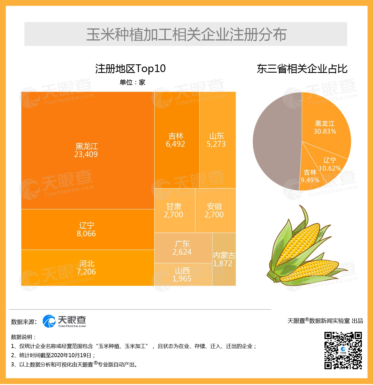 玉米价格每吨涨千元 我国过半的玉米种植加工相关企业注册于东三省
