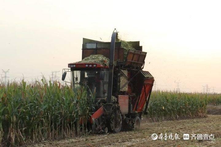 东营区召开主要粮食作物生产全程机械化现场观摩会