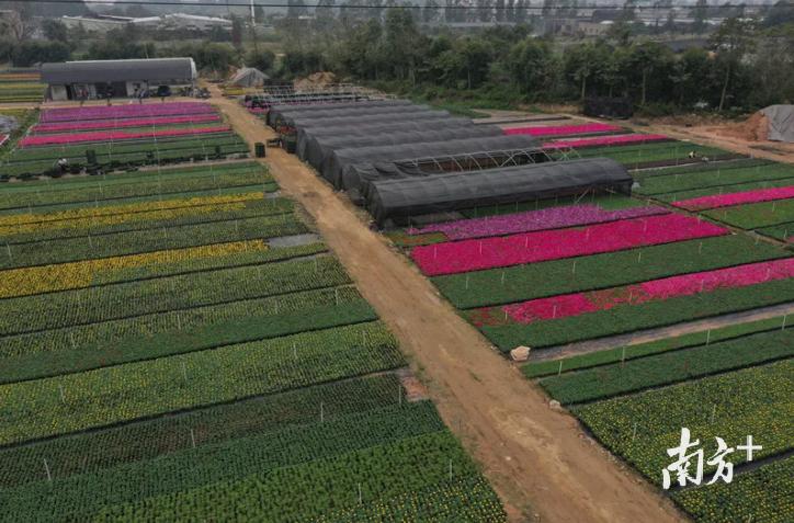 """手机远程""""控制""""生长环境,道滘这个农业园年产花卉5千万株"""