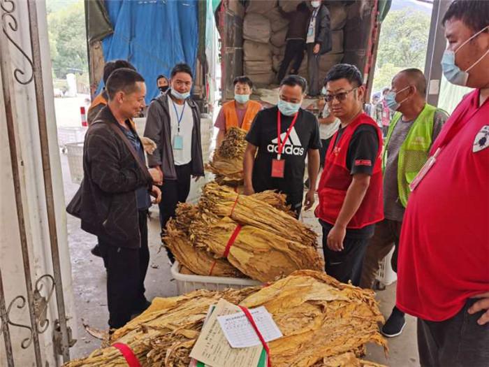 玉龙县巨甸镇: 2020年烤烟产值近7000万再创历史新高