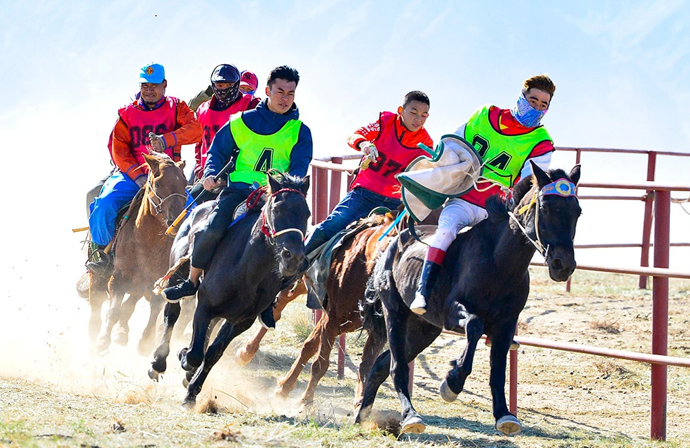 内蒙古巴彦淖尔:赛驼赛马乐享长假