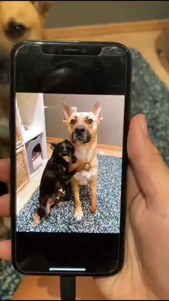 好聪明的狗狗 (video:porra o Lorran só fala merda)