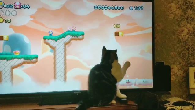 这个游戏好好玩,还可以逗猫,mars哥哥玩的好开心~