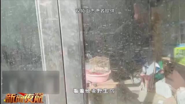 黑龙江捕鸟手段升级 鸟鸣声诱鸟入网