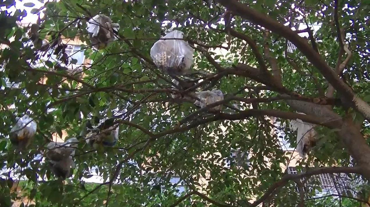 """奇怪!景观树上""""长""""满几十个垃圾袋,业主一番控诉道出气愤真相"""