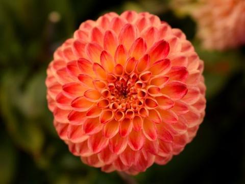 10月下旬,魅力过人,桃花处处在,捕获真心爱情的四大星座