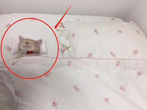 女子半夜听见枕头边有声音,打开灯一瞧,直接蒙了