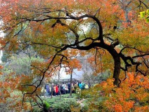 """苏州10个""""最值得去""""的园林,其中9个都是世界文化遗产"""