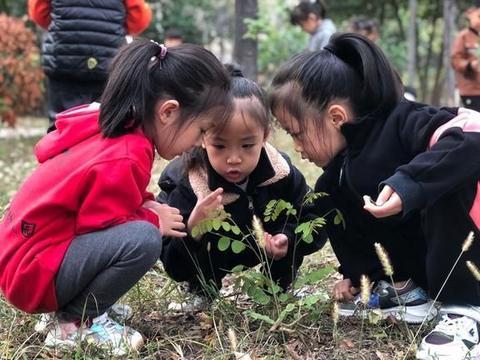 """山能枣矿集团柴里煤矿幼儿园开展""""走进大自然,我爱我家园""""秋游"""