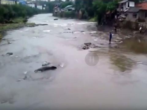 洪水过后河中心惊现巨大生物,小伙走近一看让人又惊又喜!