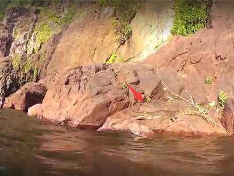 """河里游水发现石块上有根大""""树杈"""", 靠近后它动了起来"""