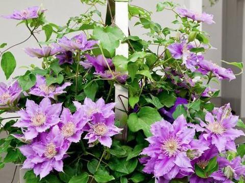现在种上3种花,好养又耐寒,不愁冬天没花赏!