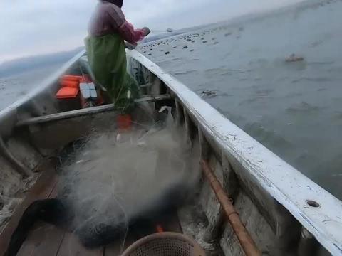 阿雄出海遇极品大鲈鱼,六斤重两手都抓不稳,刚回家就卖出近千块