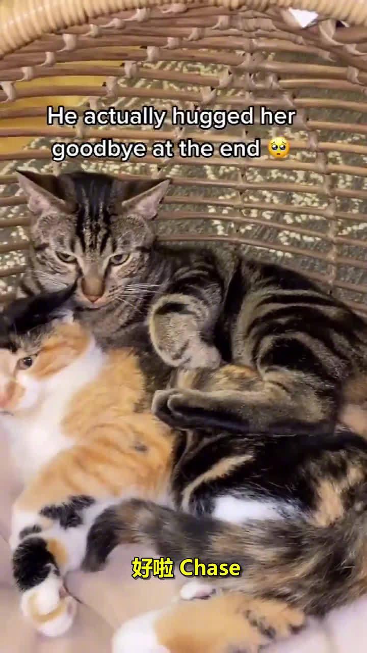 铲屎官新收养了一只独眼小猫咪,假装要把它送走……