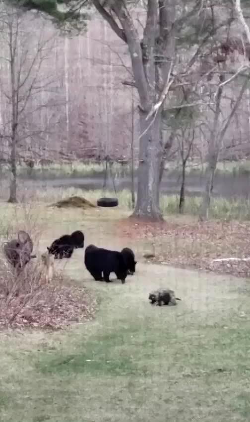 后面的四只小熊笑死我了