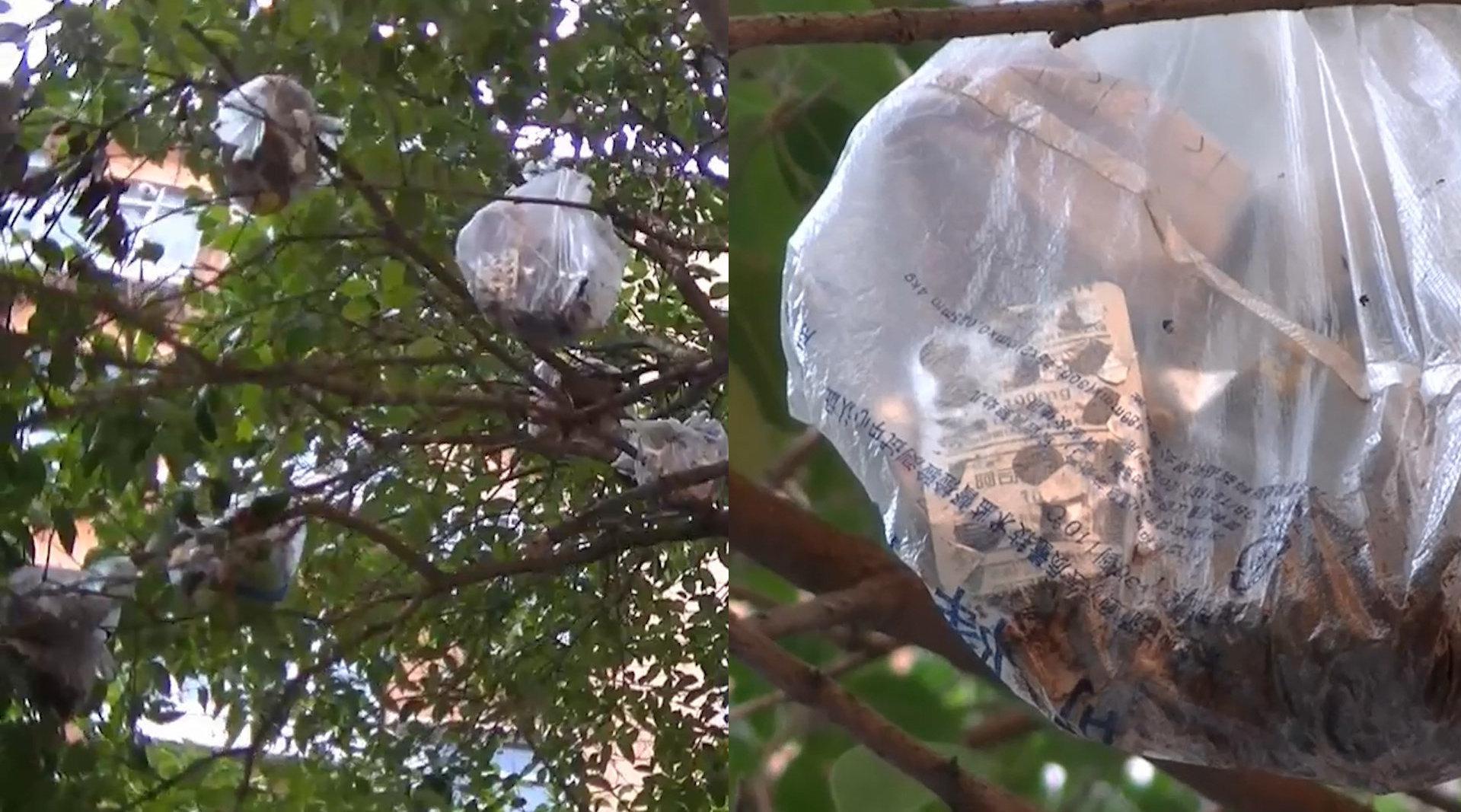 郑州某小区绿化树上挂满垃圾袋 ,一楼住户:都是楼上图省事扔的