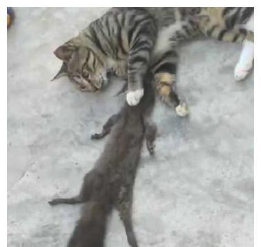 猫咪将松鼠当老鼠给捞了,面对主人一脸坚毅:今晚,不要给我留饭