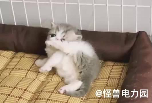 谁能抵挡的住小猫咪呢