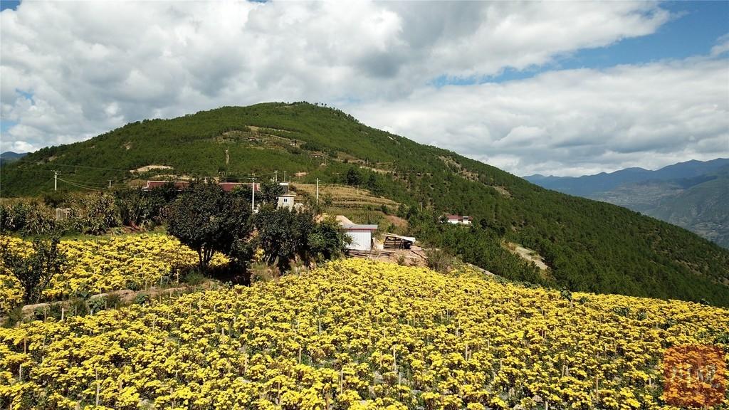 """昔日""""难民村""""变身美丽新村,来自攀枝花的这片花海,为木里县种下10年期待"""