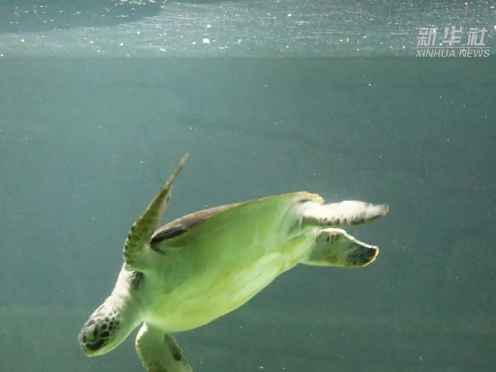 漫游天津市动物园两栖动物馆