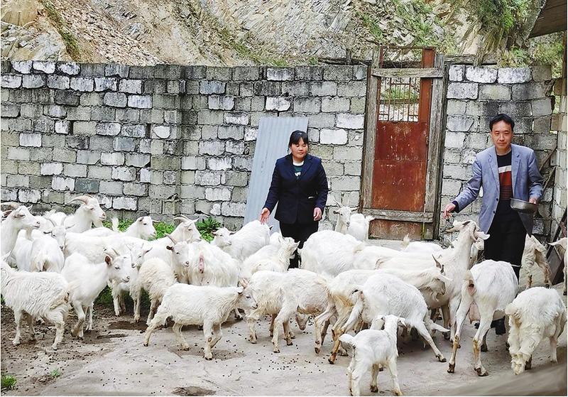 """【脱贫故事】陕西镇巴县:""""扶贫羊""""带领贫困户走上""""羊光大道"""""""