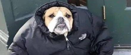 明天沈城降雨!雨后气温狂降10℃!入冬啦!赶紧穿秋裤!