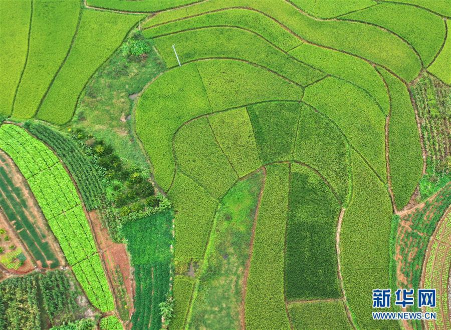 无人机鸟瞰纵横交错的稻田 色彩丰富宛若调色板
