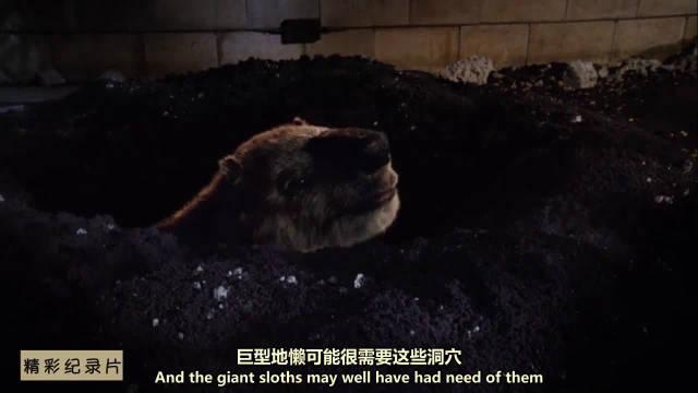 惊艳动画展现剑齿虎击杀巨獭!骨感化石讲述远古的故事!
