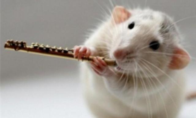 在医学上老鼠比黑猩猩更受青睐,为什么都爱拿白鼠做实验?