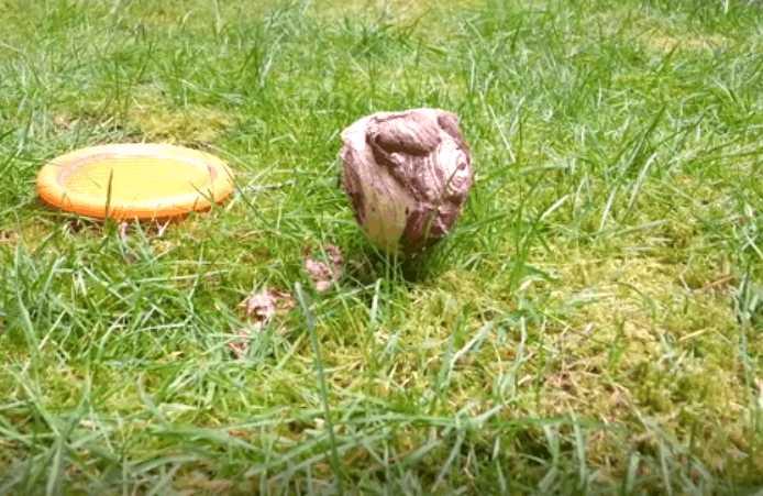 女子在后院的草丛里挖到一个圆形物体,剥开一瞧,大开眼界
