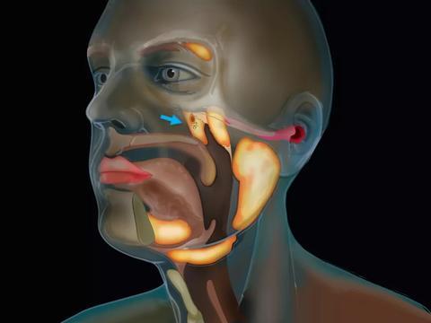一组秘密的唾液腺,藏在鼻子后面