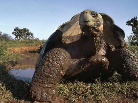 盘点全球最长寿4种生物,原来乌龟不是榜首,最后一名竟能永生!