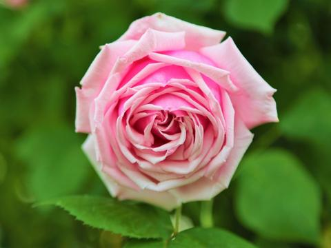 10月真爱缘定三生,月老送良缘,真爱来临,注意要脱单的四大生肖