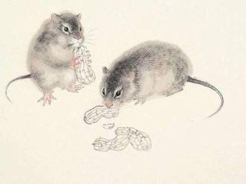 10月属鼠人会遇见一生最大的贵人,历经2次喜事,走向人生巅峰!