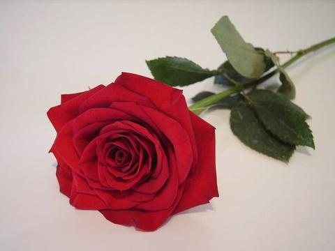 10月开始,运势大红大紫,3个生肖得贵人鼎力相助,家中喜事连连