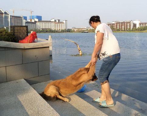 金毛在家洗澡不老实,强势妈妈带去河边,二话不说丢进河中!