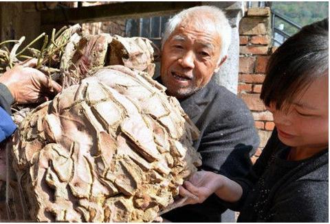 农村大爷在田里挖出一个200斤的土豆!专家说可能和陨石有关!