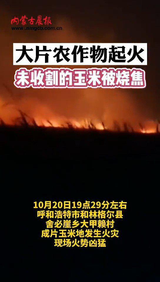 内蒙古呼和浩特市上百亩玉米地被烧