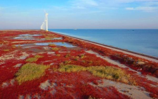 """直击现场丨滨海新区惊现红海滩,一半是海水,一半是""""火焰""""!"""