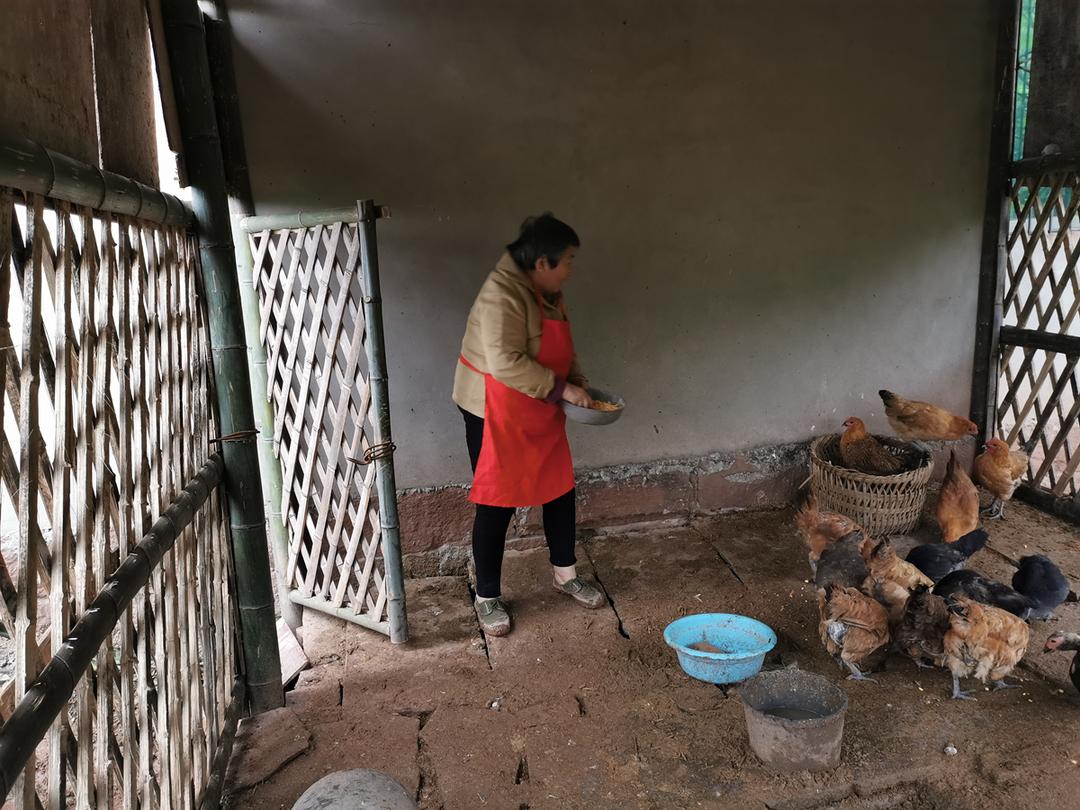 鸡鸭圈养好 乡村颜值高 重庆铜梁人居环境整治专项行动显成效