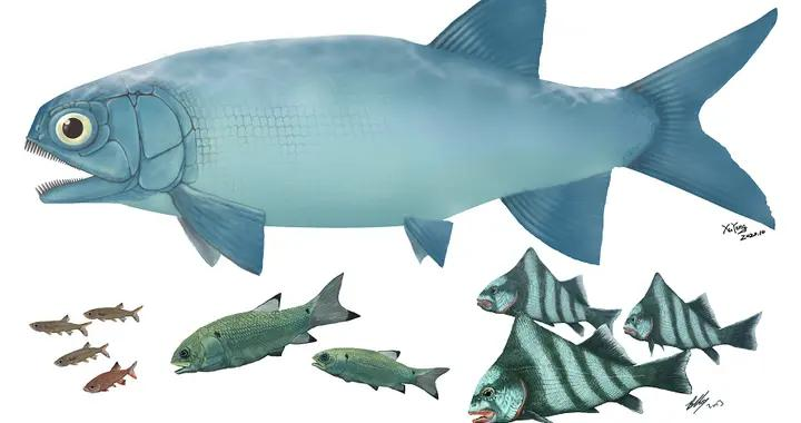 云南发现暴鱼化石 见证三叠纪海洋生物复苏