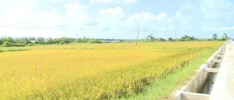 农业现代化:添薪助燃农民红火生活