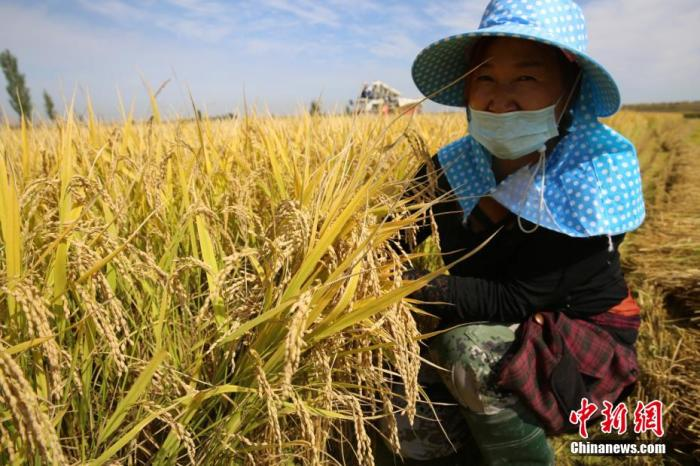农业农村部:预计今年粮食产量达到历史最好水平图片